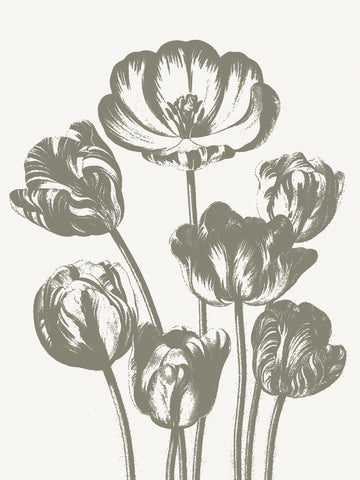 Tulips (Ivory & Burlap) -  Botanical Series - McGaw Graphics