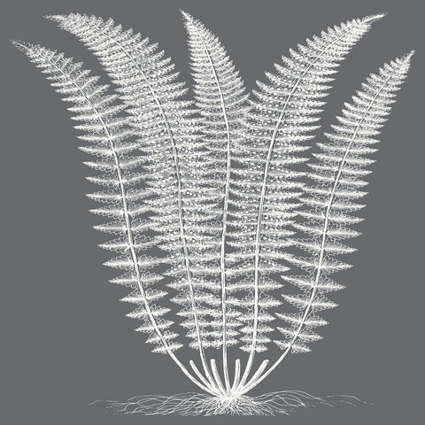 Fern (Gray & Ivory) -  Botanical Series - McGaw Graphics