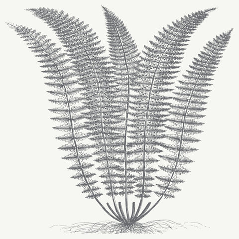 Fern (Ivory & Gray) -  Botanical Series - McGaw Graphics