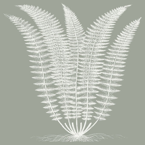 Fern (Sage & Ivory) -  Botanical Series - McGaw Graphics