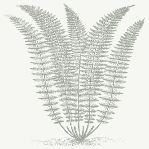 Fern (Ivory & Sage) -  Botanical Series - McGaw Graphics
