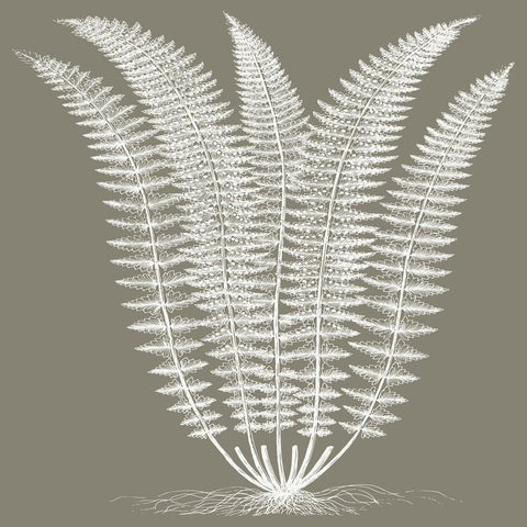 Fern (Burlap & Ivory) -  Botanical Series - McGaw Graphics
