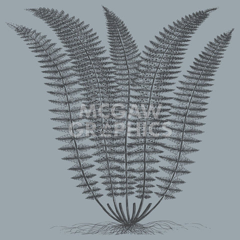 Fern (Slate & Ink) -  Botanical Series - McGaw Graphics