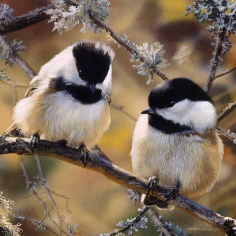 Carl Brenders - In the Black - Black Capped Chickadees (detail)