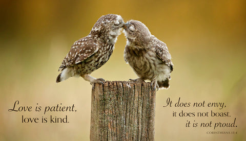 Another Little Peck (Love is patient...) -  Mark Bridger - McGaw Graphics