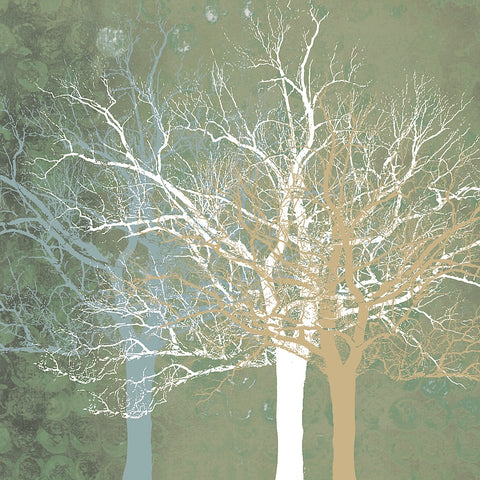 Quiet Forest -  Erin Clark - McGaw Graphics