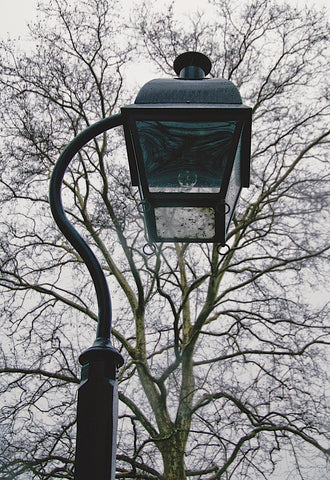 Lamp and Branches (color) -  Erin Clark - McGaw Graphics