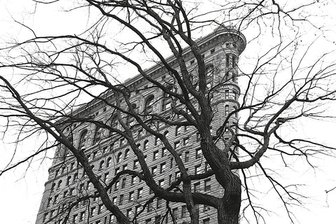 Erin Clark - Flatiron with Tree (b/w)