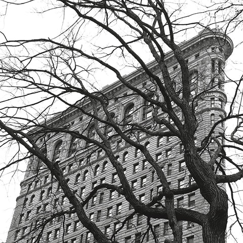 Erin Clark - Flatiron with Tree (b/w) (detail)