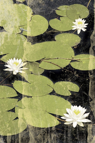 Pond Blossoms -  Erin Clark - McGaw Graphics
