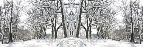 Winter Archway -  Erin Clark - McGaw Graphics