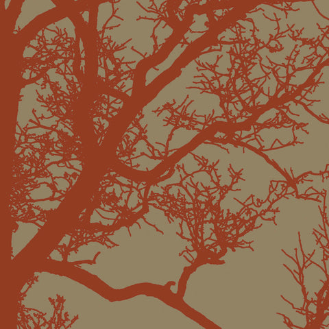 Cinnamon Tree IV -  Erin Clark - McGaw Graphics