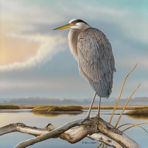 Marsh Watch - Great Blue Heron -  Richard Clifton - McGaw Graphics