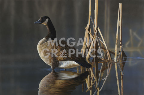 Richard Clifton - Greet the Sun - Canada Goose