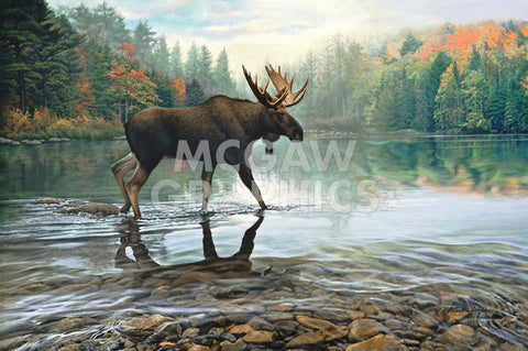 Moose Crossing -  Russell Cobane - McGaw Graphics