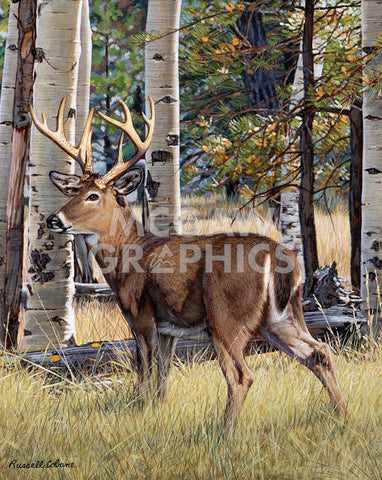 Fall Whitetail -  Russell Cobane - McGaw Graphics
