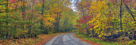 Autumn Road -  Doug Cavanah - McGaw Graphics