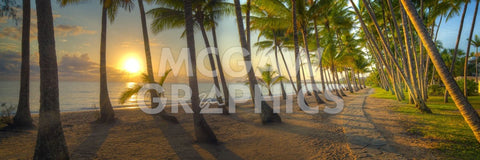 Palm Cove -  Doug Cavanah - McGaw Graphics