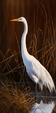Great Egret Marsh -  Richard Clifton - McGaw Graphics