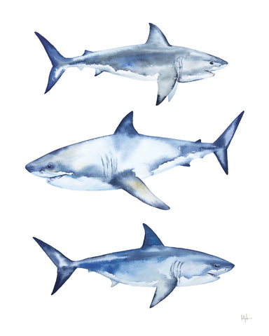 Great Whites -  Kelly Clause - McGaw Graphics