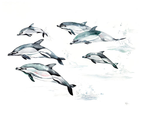 Common Dolphin -  Kelly Clause - McGaw Graphics