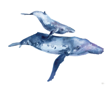 Mother & Calf Humpback -  Kelly Clause - McGaw Graphics