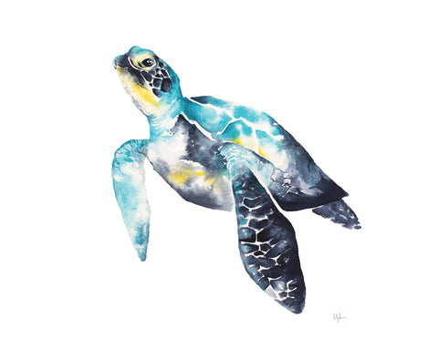 Hawksbill Turtle -  Kelly Clause - McGaw Graphics