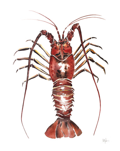 Spiny Lobster -  Kelly Clause - McGaw Graphics