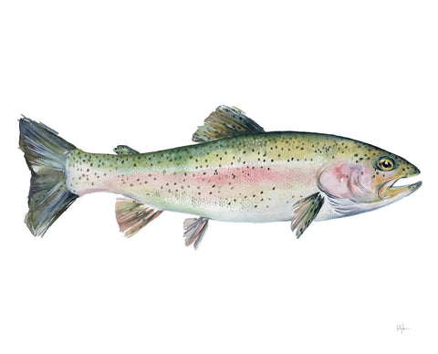Rainbow Trout -  Kelly Clause - McGaw Graphics