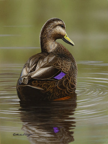 At Rest - Black Duck -  Richard Clifton - McGaw Graphics