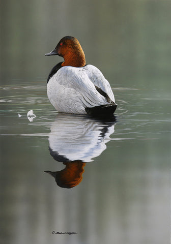 Quiet Shoal - Canvasback -  Richard Clifton - McGaw Graphics