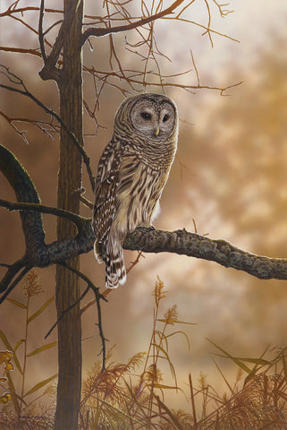 Out of the Shadows - Barred Owl -  Richard Clifton - McGaw Graphics