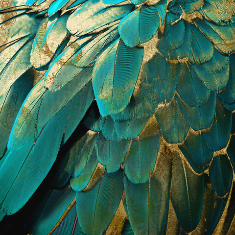 Feather Glitter Teal and Gold -  Color Bakery - McGaw Graphics