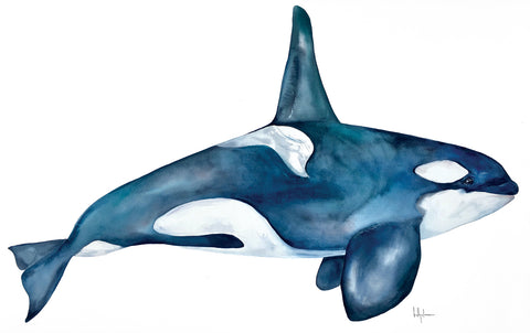 Southern Resident Killer Whale -  Kelly Clause - McGaw Graphics