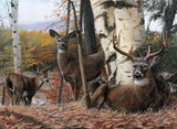 Autumn's Majesty -  Kevin Daniel - McGaw Graphics