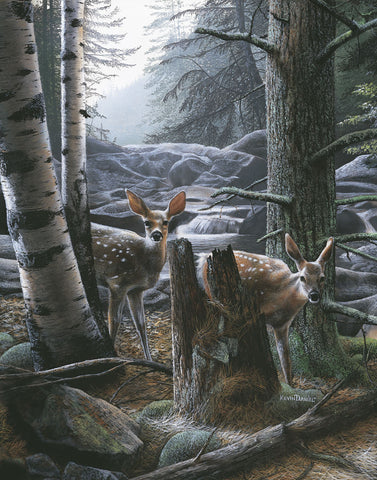 Kevin Daniel - White Tail Fawns
