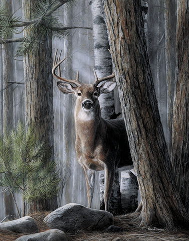 Solitary Buck -  Kevin Daniel - McGaw Graphics