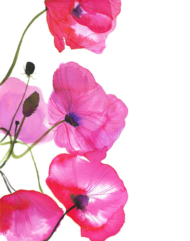 Perfect Poppies -  Jessica Durrant - McGaw Graphics