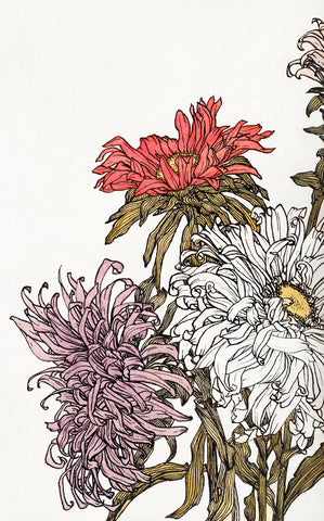 Chrysanthemums - McGaw Graphics