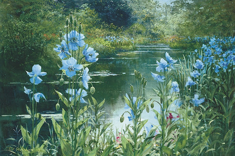 Blue Poppies -  Peter Ellenshaw - McGaw Graphics