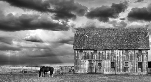 Horse and Barn -  Trent Foltz - McGaw Graphics