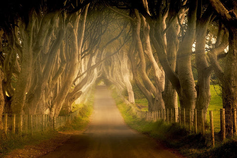 Enchanted Road -  Dennis Frates - McGaw Graphics