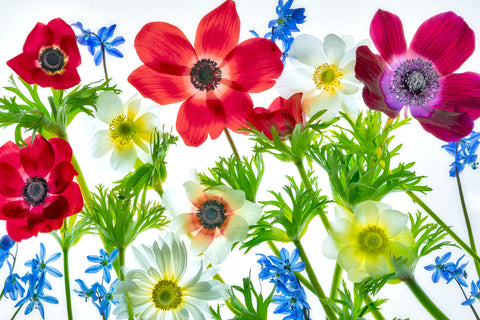 Flower Arrangement with Anemones -  Dennis Frates - McGaw Graphics