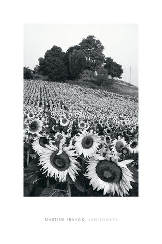 Martine Franck - Sunflowers, Provence, France