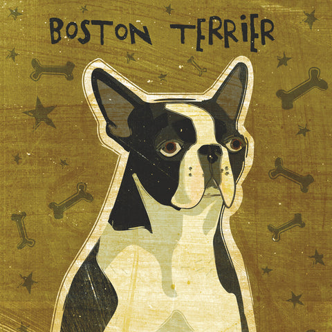 Boston Terrier (square) -  John W. Golden - McGaw Graphics