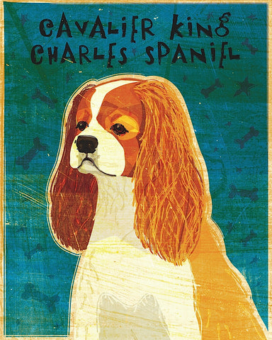 Cavalier King Charles (Blenheim) -  John W. Golden - McGaw Graphics