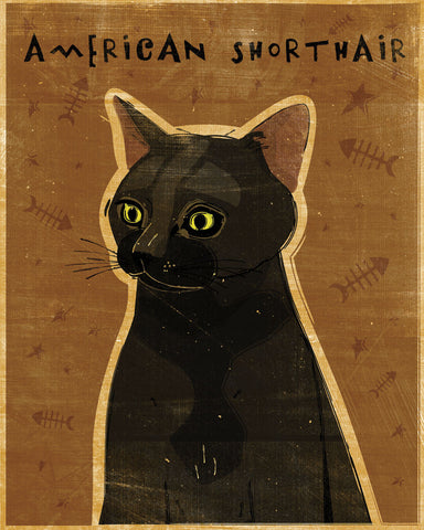 American Shorthair -  John W. Golden - McGaw Graphics