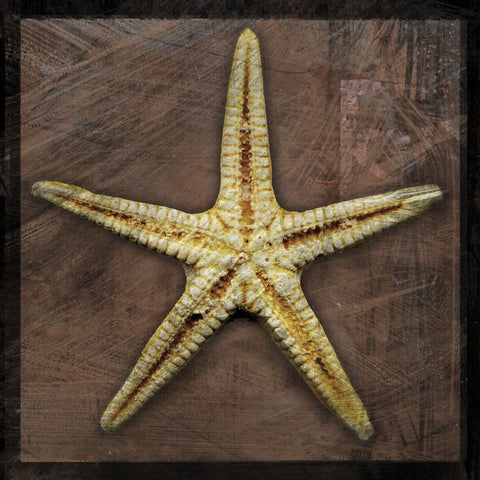 John W. Golden - Starfish