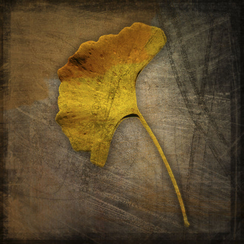Gingko -  John W. Golden - McGaw Graphics