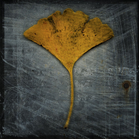 Gingko 2 -  John W. Golden - McGaw Graphics